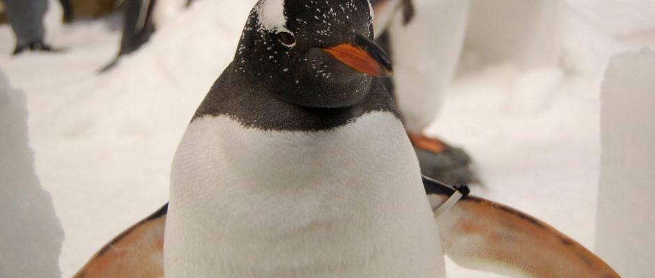 penguin-802453_960_720