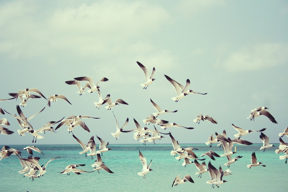 seagulls-815304_960_720